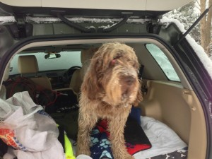 Hairy beast ready for his trip to Cambridge...